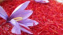 Nhụy Hoa Nghệ Tây Dòng Negin Saffron Gohar