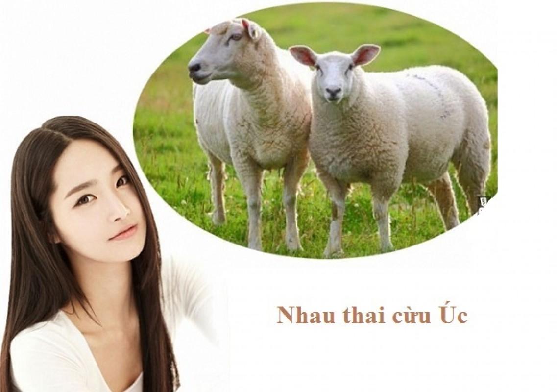 Uống Nhau Thai Cừu Có Tác Dụng Phụ Không?